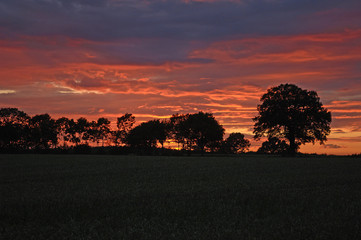 Sunset with tree silhouettes against red evening sky, Rhena, Mecklenburg-Western Pomerania, Germany, Europe