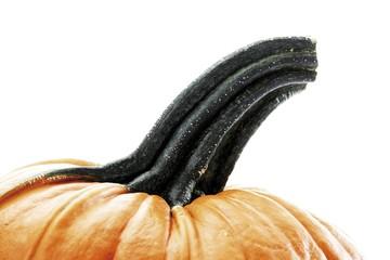 Pumpkin (Cucurbita)