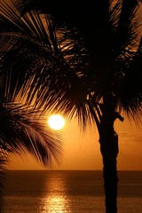 Palm trees at sunset, Maui, Hawaii, Pacific Ocean