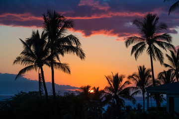 Tropical palm trees during island sunset
