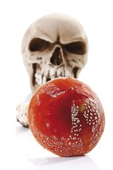 Fly Agaric or Fly Amanita mushroom (Amanita muscaria) in front of a skull