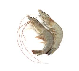 Shrimp. Isolated on white background.