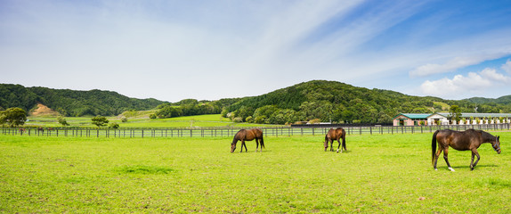 北海道 サラブレッド 放牧風景