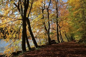 goldene Herbststimmung im Wald am See