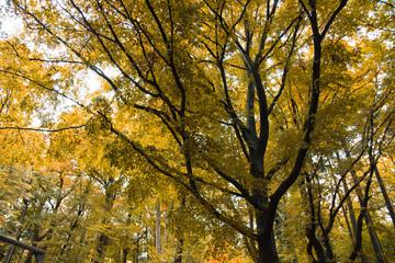 Baum Hintergrund gelb Herbst