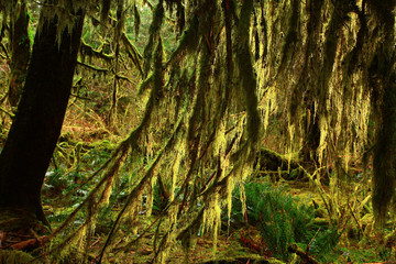 a picture of an Pacific Northwest rainforest