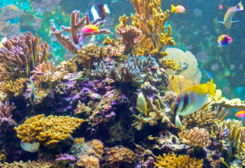 spiny coral with fishes