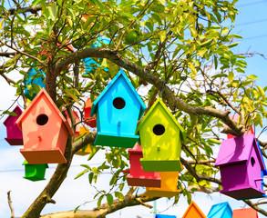 Closeup view birdhouses on a mandarin tree