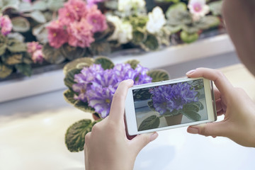 Girl makes a photo of a violet in a flower shop.