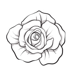 Rose flower isolated outline hand drawn. Stock line vector illus