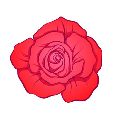 Red rose flower isolated hand drawn. Stock line vector illustrat