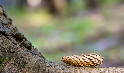 Close-up of pine tree cone with colorful blurred background. New Year and Christmas concept.
