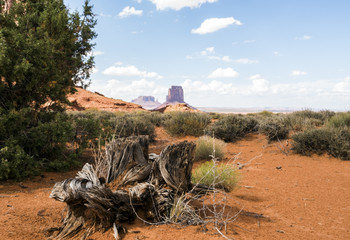 Tree trunk, Monument Valley panorama - Arizona, AZ, USA