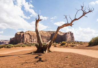 Twisted dry tree with shadow - Monument Valley panorama - Arizona, AZ, USA