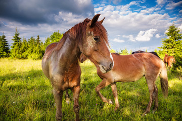 Dirty horses grazing in the pasture that is illuminated by the sun. Location place Carpathian, Ukraine, Europe. Beauty world.