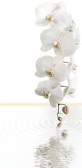 orchidée blanche, concept spa, massage, fond blanc