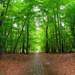 Im Wald von Prerow