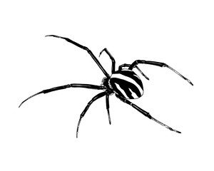 crawling spider drawn in ink by hand on a white background