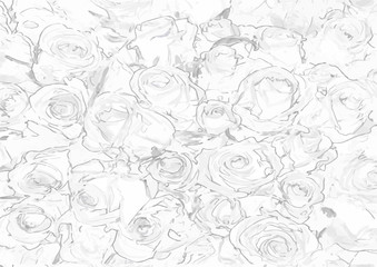 Vector pattern with seamless roses on white background