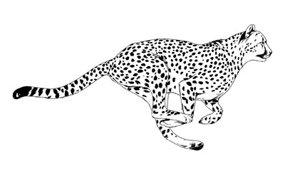 running Cheetah hand-drawn with ink on white background logo tattoo