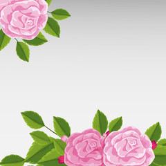 Background template with pink roses
