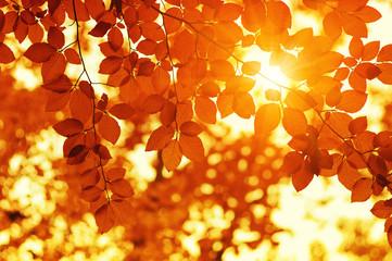 Autumn leaves on sun