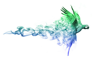 Macaw with a white background animal kingdom collection with amazing effect