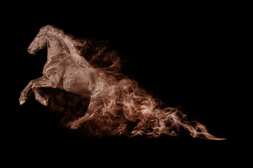 Horse animal kingdom collection with amazing effect