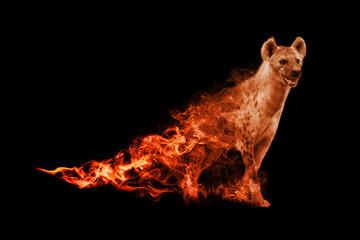 Hyena animal kingdom collection with amazing effect