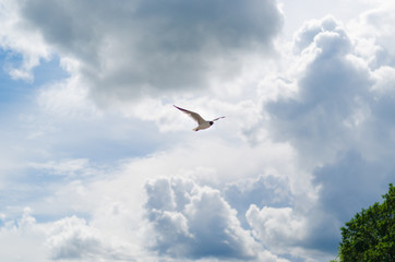 Seagull in the sky. Flying in the clouds. A bird is a symbol of freedom.