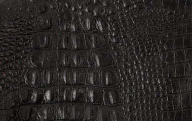 Poster Crocodile Texture crafted of black crocodile leather