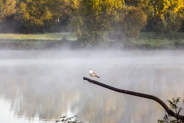 bords de loire, brouillard arbre oiseau