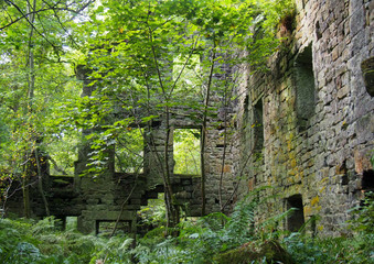 the ruins of staups mill ivergrown with trees and ferns in summer near hebden bridge west yorkshire