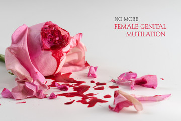 cut rose blossom, blood and petals on a bright gray background with text No More Female Genital Mutilation,  concept for international day 6 february