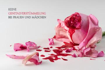 cut rose blossom and blood, bright gray background with german text Keine Genitalverstuemmelung bei Frauen und Maedchen, meaning No Female Genital Mutilationn, concept international day 6 february