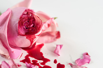 cut rose blossom, blood and petals on a bright gray background, concept for the international day of zero tolerance for female genital mutilation, 6 february
