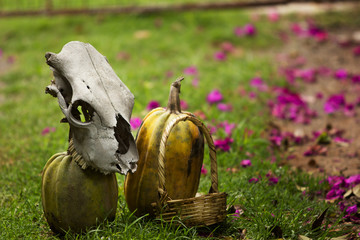 Cow skull and two mature pumpkins on green grass with violet flowers, handmade basket