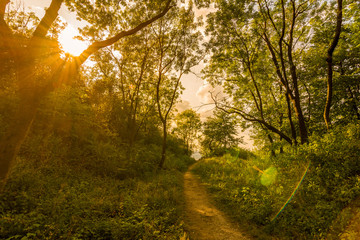 Magic forest with sun rays. Path in the forest, trees, grass and bushes. Magical colors.