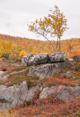 Autumn tree and rocks