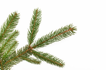 Fir branch isolated on white