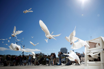 Doves are released for each victim of the Route 91 Harvest music festival mass shooting at City Hall plaza in Las Vegas