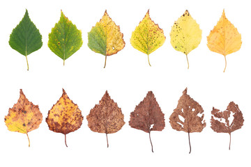 autumn concept, age changes of leaves, aging stages, the birth death, drying, time flies Wall mural