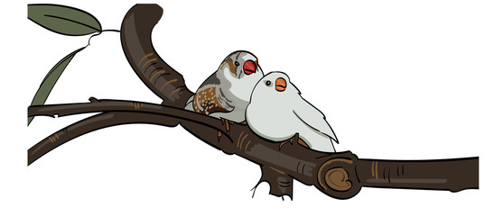 Two birds cuddling together sitting on a branch.