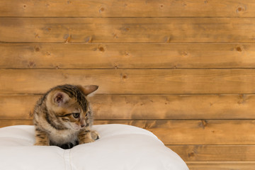 the kitten sits on a chair and looks away at the wooden wall, the place for the inscription