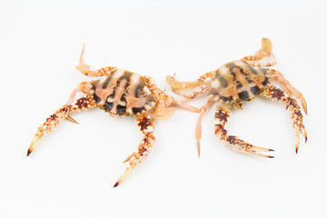 Crab isolated white background. Fresh Seafood. Selective Focus. Copy Space Concept
