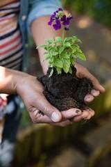 Woman holding sapling plant in garden