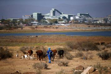 A shepherd drives a herd of cattle towards the Mogalakwena platinum mine in Mokopane