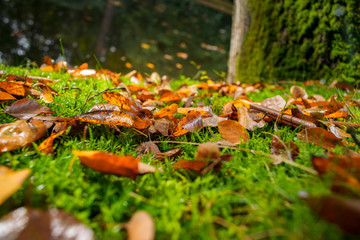 Carpet of leaves and moss on the forest floor
