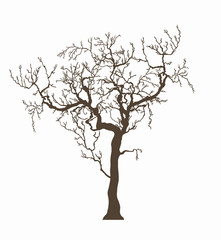 Tree without leafage isolated on white, graphics