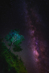 Wall Mural - Landscape with Milky way galaxy over tree. Night sky with stars. Long exposure photograph.